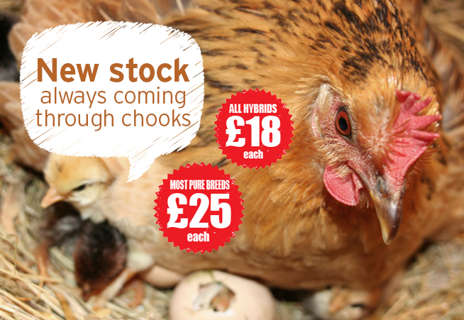 buy chickens west midlands